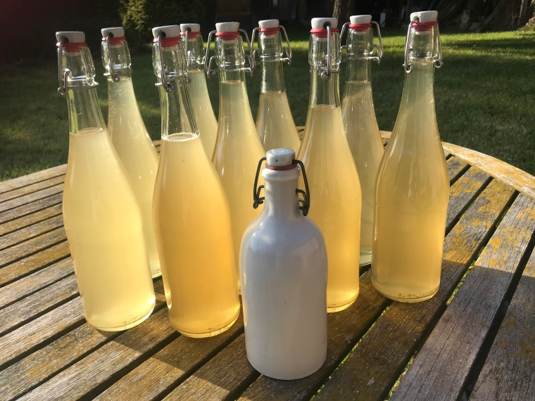 Elderflower bottles.JPG